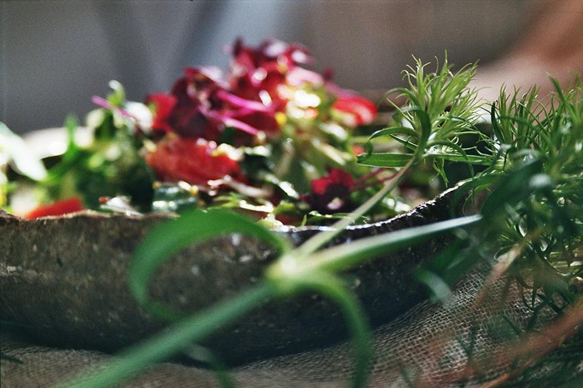 Blood orange & Swiss chard salad